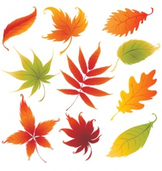 autumn design vector image
