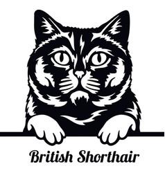 British shorthair cat - cat breed cat breed head vector