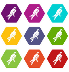 Falcon icon set color hexahedron vector