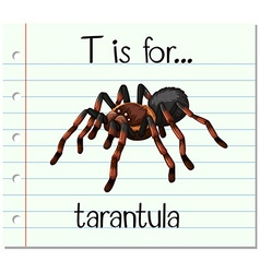 Flashcard letter T is for tarantula vector
