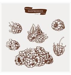 Raspberries drawing set vector image