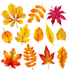 realistic autumn leaves fall orange wood foliage vector image
