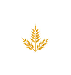 wheat yellow logo icon template vector image