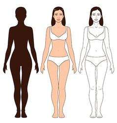 Woman body outline vector