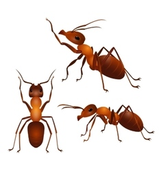 Set of ants with two antennas and six legs in vector image
