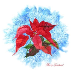 Background with Christmas poinsettia vector image