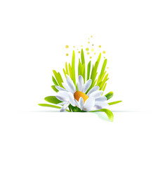 Chamomile with grass decor vector