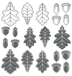 Acorns and oak leaves isolated objects vector