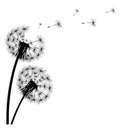 Black silhouette a dandelion on a white vector