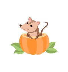 Cute opossum sitting in pumpkin adorable wild vector