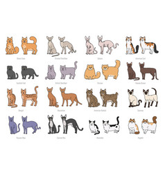 Popular cat breeds face and profile set vector