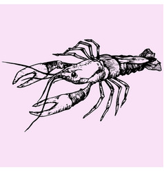 crayfish lobster vector image vector image