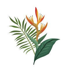 Bird of paradise flower and leaves palm vector