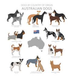 Dogs country origin australian dog breeds vector