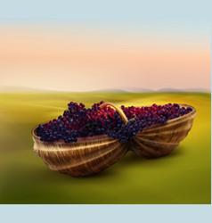 grape in basket vector image