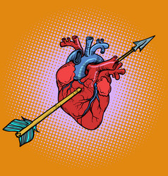real heart with cupid arrow vector image