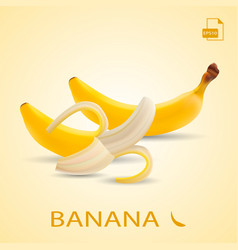 set of two fresh bananas isolated on a background vector image