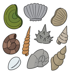 set sea shell vector image