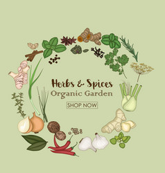 spices and herbs for shop organic garden vector image