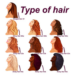 Hair types chart displaying all types and labeled vector