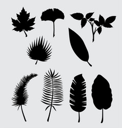 leaf nature silhouette vector image