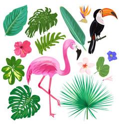 set colorful tropic elements vector image