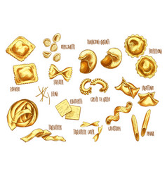 Sketch icons of italian pasta sorts variety vector