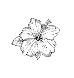 Summer hibiscus tropic flower exotic herb plant vector