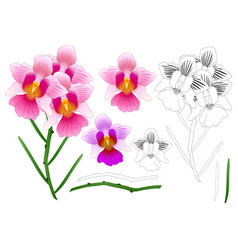Vanda miss joaquim orchid outline vector