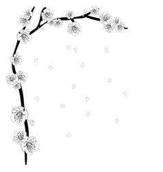 White plum blossom flower outline border vector