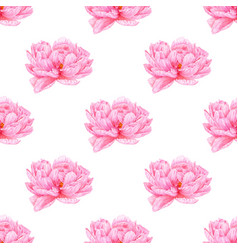 Watercolor pink peony seamless pattern botanical vector