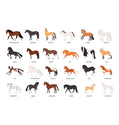 Collection of horses of various breeds isolated on vector