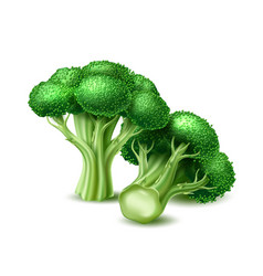 Realistic broccoli cabbage vegetable vector