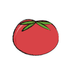Red tomato vegetable vector