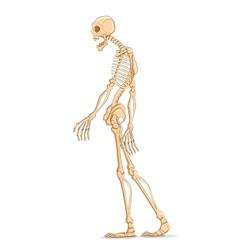 Skelton vector image