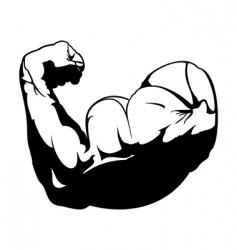 Biceps vector