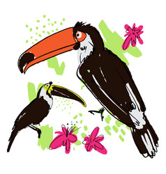 hand draw tropical birds vector image