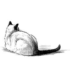 Sketch lying down domestic thai cat vector
