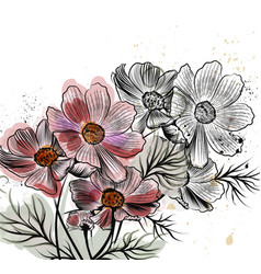With cosmos flowers in engraved style vector