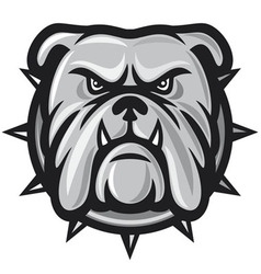 Bulldog head vector image