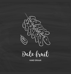 date fruit drawing dried dates sketch date vector image
