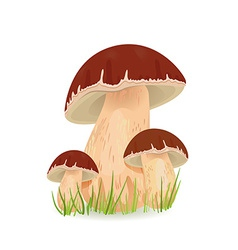 Edible mushroom porcini for you design vector image