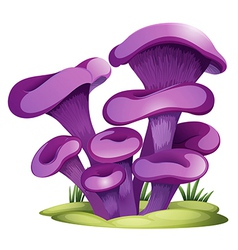 Purple fungi vector