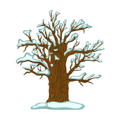 winter oak covered with snow isolate on a white vector image