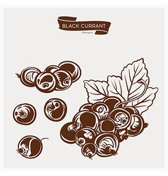 Black currant drawing set vector image