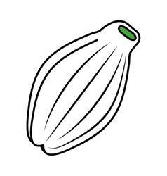 Papaya tropical fruit icon vector