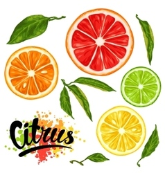 Set with citrus fruits slices Mix of lemon lime vector image