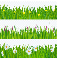 spring grass and flowers vector image