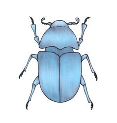 bug blue hand drawn insect detailed vector image