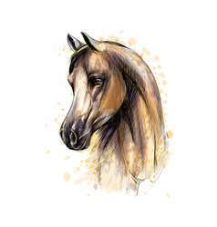 Horse head portrait from splash of watercolors vector